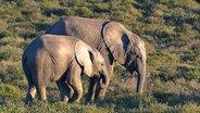 Eine Elefantenkuh mit Baby. © Vincent TV GmbH