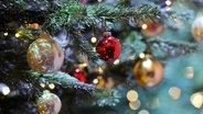 Christbaumkugeln schmuecken einen Weihnachtsbaum. © dpa Foto: Tobias Hase