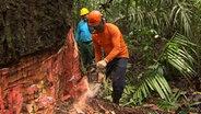 Nachhaltige Forstwirtschaft im brasilianischen Regenwald. © NDR/artdocu