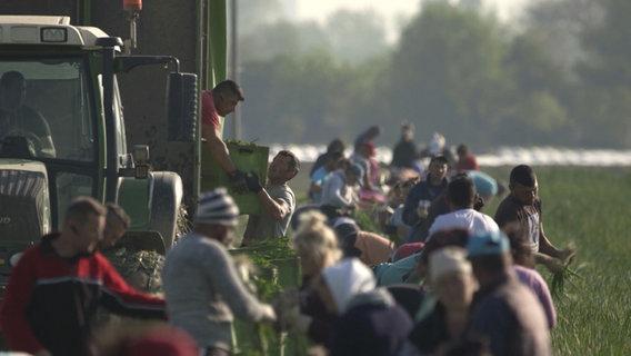 Erntehelfer in der Coronakrise. © NDR/ARD
