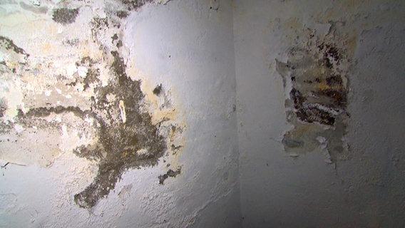 Schimmelige Wände in einem raum © NDR Foto: Screenshot