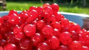 Eine Schale voller roter Johannisbeern im Garten. © CC BY 2.0 Fotograf: Seph Swain