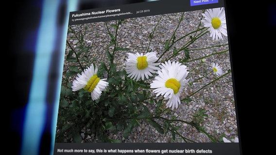 Ein Bild zeigt mutierte Blumen.  Foto: Screenshot