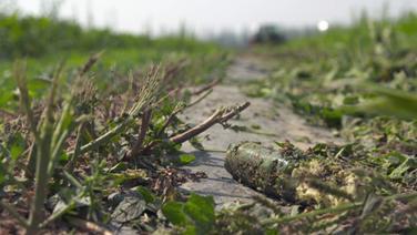 Dumpinglöhne für Erntehelfer
