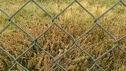 Wiese hinter einem Zaun © NDR