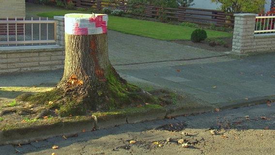 Ein abgesägter Baumstumpf steht am Straßenrand.